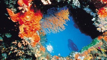 Reef wonders won't last if temperatures keep rising, report says.