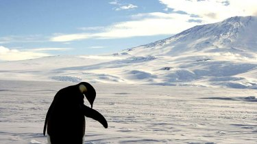 Unhappy feet ... many nations have jostled to control Antarctica.