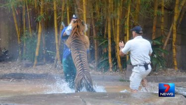 An Australia Zoo worker rushes to the trainer's aid.