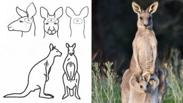 An eastern grey kangaroo (right) and the guidelines on the humane killing of kangaroos.