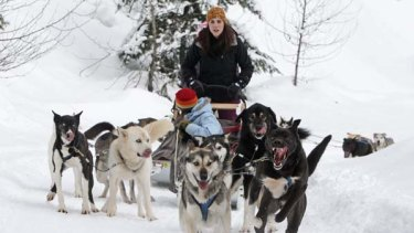 Killed ... husky dogs pull tourists as part of a tour run by Outdoor Adventures in Canada during last year's Winter Olympics.