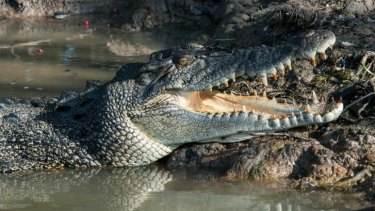 Crocodiles are on a long list of threats from which we are being protected by the state government.