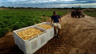 Mornington Peninsula farmer Richard Hawkes and his crates of potatoes destined to feed Melbourne's poor and hungry through Foodbank Victoria.