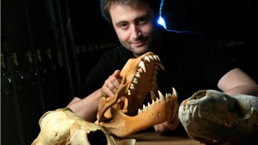 Dr Erich Fitzgerald of Museum Victoria with leopard seal skulls.