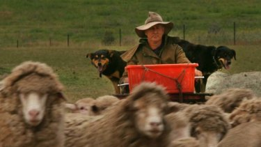 Shear disaster ... the rot set in during the Menzies era, says Charles Massy, at home on his merino stud near Cooma.