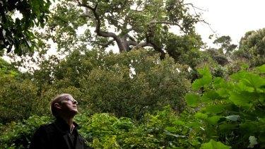 Brett Summerell, deputy executive director of Sydney's Royal Botanic Gardens.