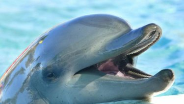 Filmmakers claim 23,000 dolphins are slaughtered at Broome's Japanese sister-city each year.