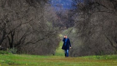 Deirdre Baum walks through her olive grove in Laharum. The trees are recovering after fires swept through the property.