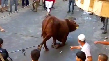 Footage of animal cruelty, apparently filmed by onlookers during the Festival of Sacrifice in Gaza in October.