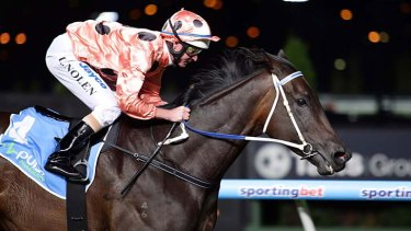 In great shape ... Black Caviar cruises to victory in the William Reid Stakes for jockey Luke Nolen.
