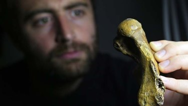 Ancient: Palaeontologist Erich Fitzgerald with the fossilised seal flipper bone discovered by amateur diver Ross Wilkie off a Melbourne beach.