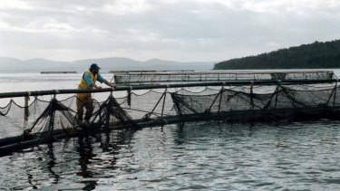A Tasmania salmon farm: more farmed fish will be on the menu as the century progresses.