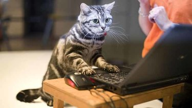 Hilarious though they may be, keep images of your cat away from your LinkedIn profile.