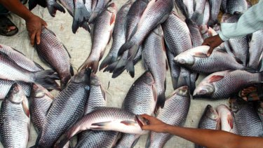 A warming world is likely to result in a smaller fish catch.