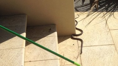 The snake tried to escape from the driveway into the garage.