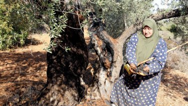 A Palestinian woman in Qarut, near Nablus, shows the damage of one of her ancient olive trees which she says was set on fire by Israeli settlers.
