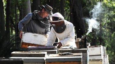 Owner of Australian Rainforest Honey, Steve Roberts, at left, with employee, Adlei Baldo, south of Pebbly Beach.