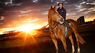The retired and still handsome Saintly returns to Flemington with track rider Katelyn Mallyon in 2011.