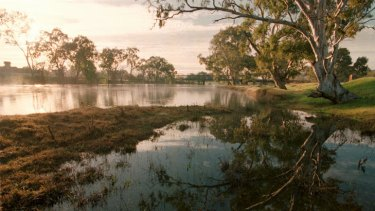 The Murray River near Albury and Wodonga.