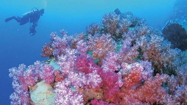 Coral reefs worldwide are at risk from climate change, a study finds.