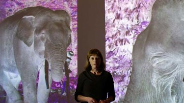 Ghostly images … Janet Laurence with a work from her After Eden installation, which focuses on the emotional life of animals and their threatened habitats.