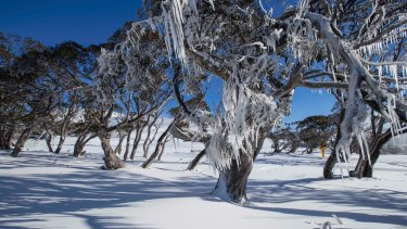 Good snow cover at Perisher on Tuesday.