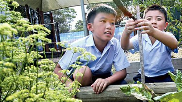 Hot plot ... Edmond Hua and Tommy Tran tend the garden at Sacred Heart Primary.