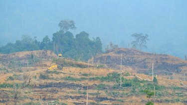 Aceh's wilderness is being illegally cleared to make way for palm oil plantations.