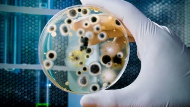 Life and death: A typical Biology exam question might concern the role of microbes in decay.