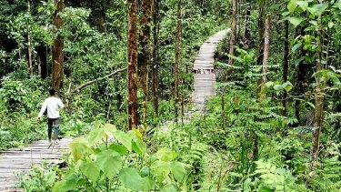 A young miner treads the forest path towards an illegal gold mining camp in the hills near the village of Geumpang in Aceh.    forestpath.jpg