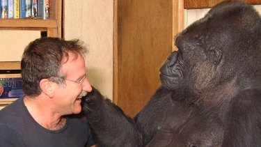Williams with Koko.