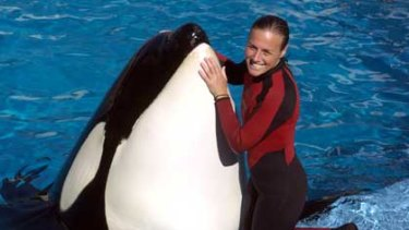Sea World trainer Dawn Brancheau was killed when one of the theme park's killer whales attacked.