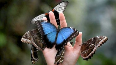 Butterfly decline in the US may be getting out of hand.