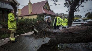 A tree has fallen on a house in Harrington Street, Stanmore