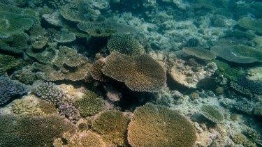 Coral bleaching around Heron Island on the Great Barrier Reef. Photo: Eddie Jim.