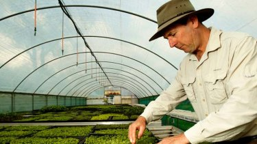 Eat your greens … farmer Steven Adey in his greenhouse of micro herbs, lettuce and weeds.