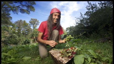 Daylesford chef Alexis Pitsopoulos, an expert in edible  weeds, forages in a local park.