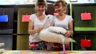 Paula and Bridgette Powers run Twinnies Pelican and Seabird Rescue at Landsborough on the Sunshine Coast.