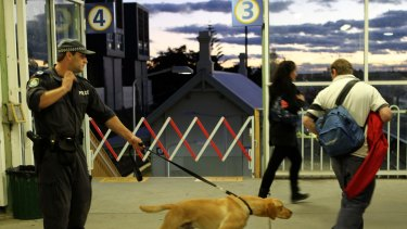 Police sniffer dogs at work at St Peters train station in Sydney ... The research found that in nearly 90 per cent of police commands more than half of searches by the dogs do not find drugs.