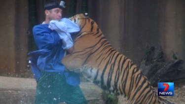 The tiger attacks the trainer at Australia Zoo.
