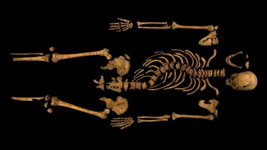 The skeleton of Richard III, with its twisted spine, which was discovered at the Grey Friars excavation site in Leicester.