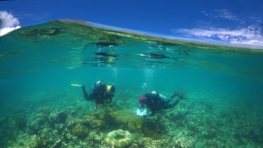 Researchers at Lizard Island on the Great Barrier Reef are studying the impacts of coral bleaching on fish and anemones that depend on them.