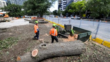 Tree felling works begin on the corner of Albert and St Kilda Roads on Wednesday.