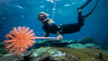 Australians view the Great Barrier Reef as its most important place to protect - and most see it in decline, from climate change-linked coral bleaching to crown of thorns star fish (as shown).