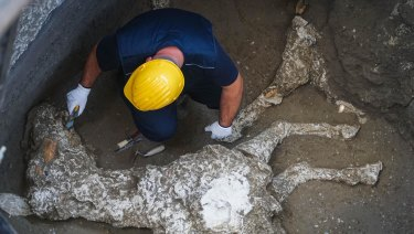 An archaeologist works near the remains of a horse, found in the stable of a villa in Pompeii, near Naples.