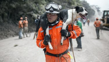 A rescue worker carries his search dog found alive near the Volcan de Fuego on Tuesday.