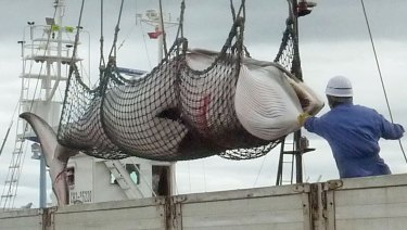 A minke whale is unloaded in Kushiro, a port on Japan's northern island of Hokkaido, in 2013.
