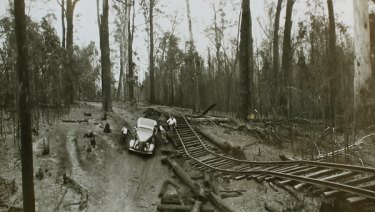 The forest near Noojee after the 1939 Black Friday bushfires.