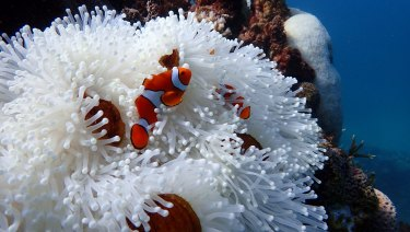Global temperature rises this century must be kept below 1.5 degrees to ensure the Great Barrier Reef's survival, the government plan says.