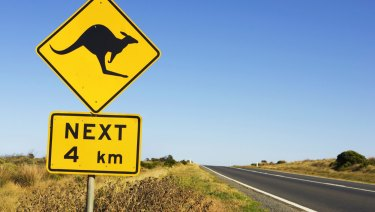 Kangaroos often jump out from scrub on the side of a road.